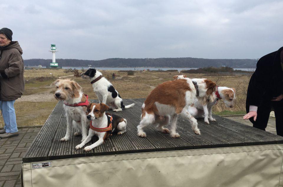 Kromispaziergänge an der Ostsee 2019