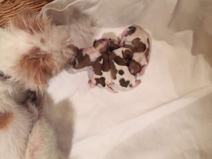 Confetti's Babies