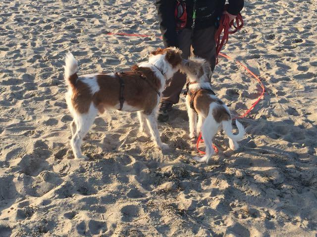 Mein erster Besuch am Strand …