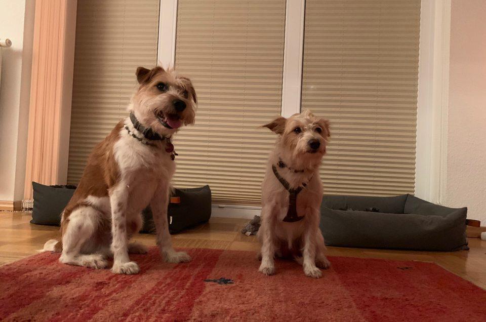 Hundehochzeit: Lina vom Tüskendoor & Jerry